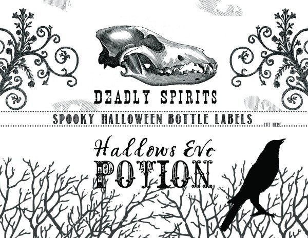 Halloween Bottle Labels Printable | Halloween party ideas | TodaysCreativeLife.com