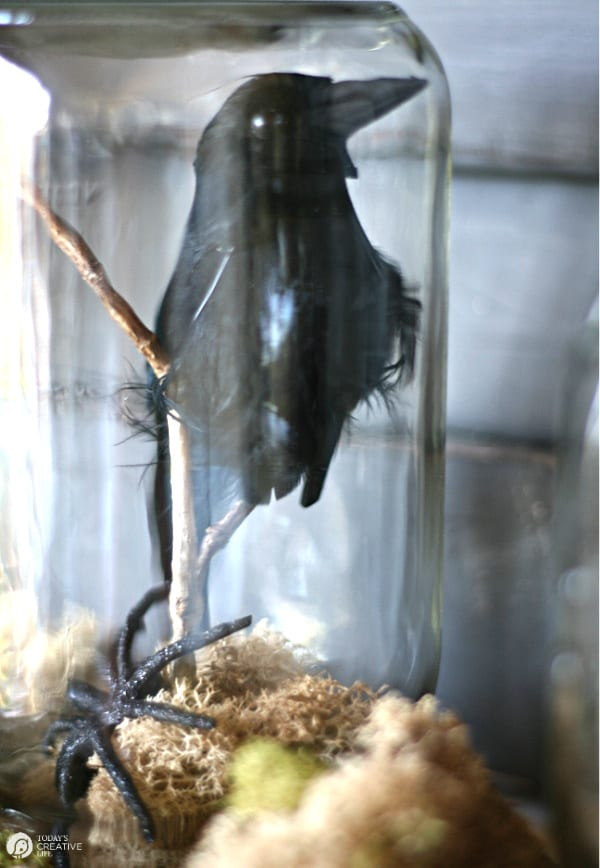 Black faux crow inside glass jar for halloween decor.