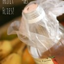 how to get rid of fruit flies | TodaysCreativeBlog.net