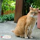 Choosing the Right Cat Litter | TodaysCreativeBlog.net