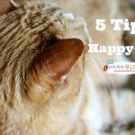 Happy Cat Tips  TodaysCreativeBlog.net