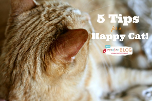 My 5 Tips for a Happy Cat | TodaysCreativeBlog.net