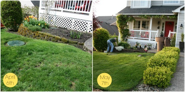 Spring Yard Before and After | It's time to get the yard ready. With the right products and care, you can have fast improvement in one month! See more on TodaysCreativelife.com