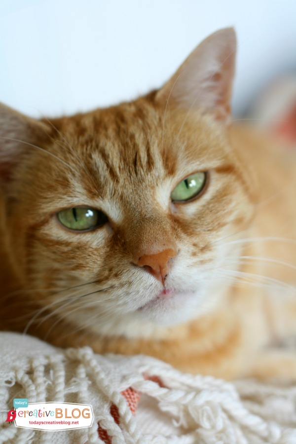 My 5 Tips for a Happy Cat
