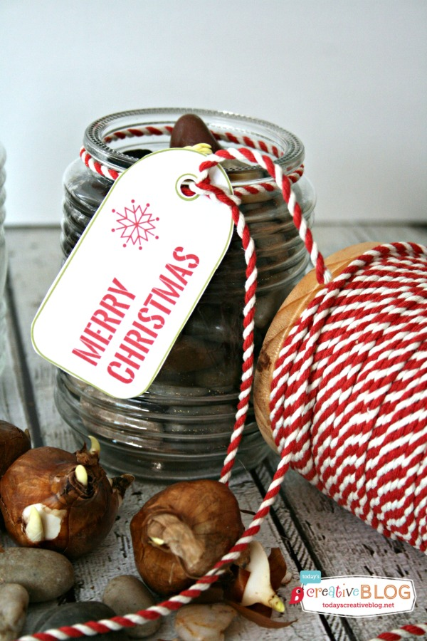 Easy Gift Ideas Paperwhites | TodaysCreativeBlog.net