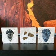 DIY Trilobite Fossils Craft | Find a full tutorial on TodaysCreativeLife.com