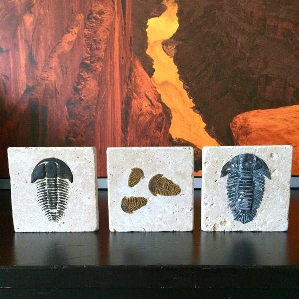 DIY Trilobite Fossil | Make your own Fossils for decorating! This Boy Bedroom idea is the perfect theme for your guy. Who knew that this Cricut Explore craft could create such original DIY ideas! See the step by step tutorial on TodaysCreativeLife.com