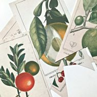 Free Printable Vintage Botanical Banner