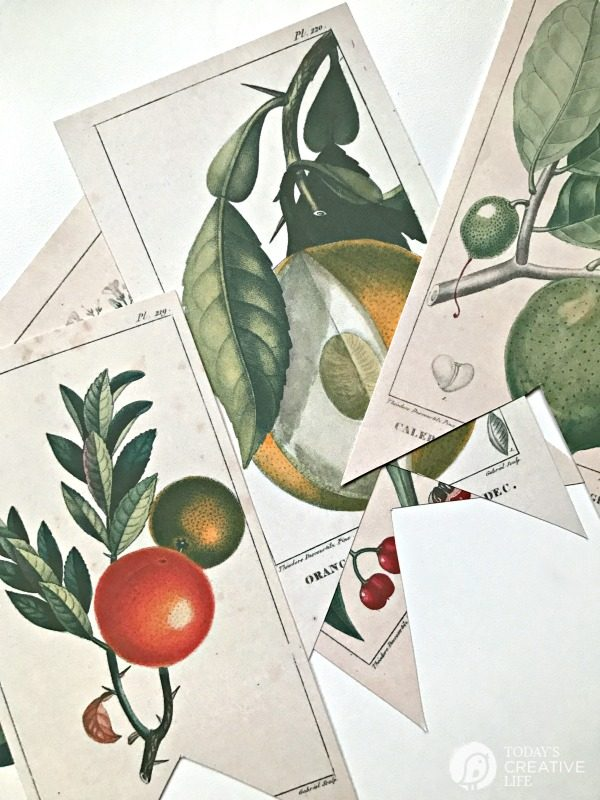 image regarding Free Vintage Printable named No cost Printable Basic Botanical Banner Todays Artistic Daily life