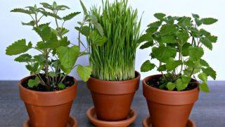 Herb Garden for Cats