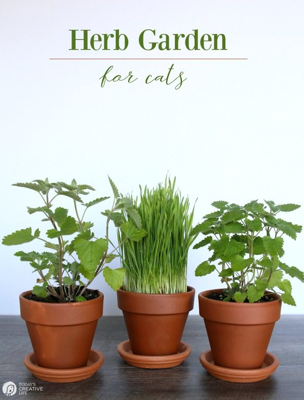 Herb Garden for Cats | Bring the outside in for your indoor cat. Herbs that are healthy and safe for your cat | TodaysCreativeLife.com