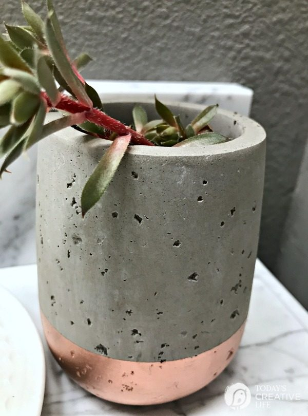 toothbrush holder repurposed into a small planter