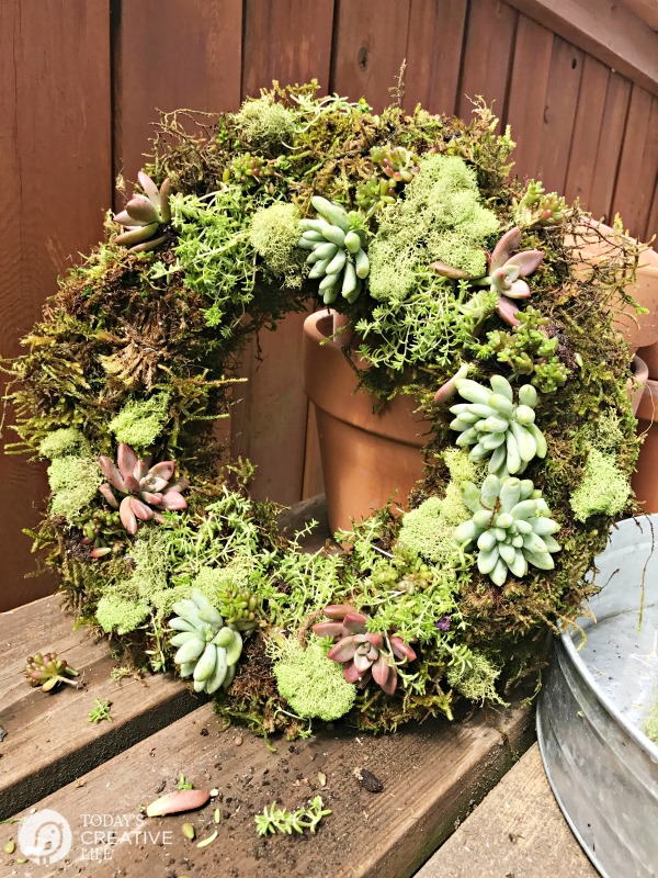 A succulent and moss wreath