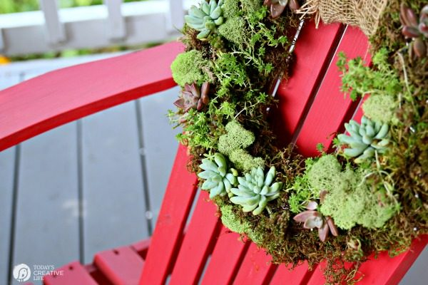 Succulent Wreath | How To Make A Living Succulent Wreath | DIY Moss And  Succulent Wreath