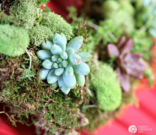 succulent plants on a moss wreath