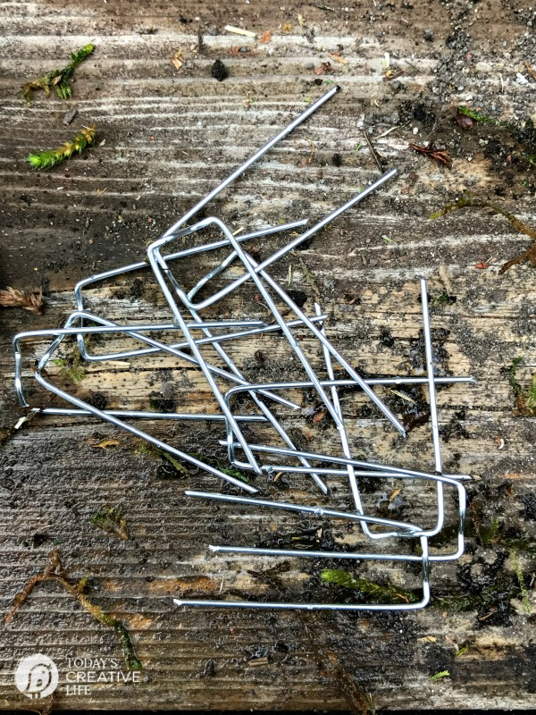 greening pins for gardening