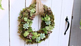 Succulent Wreath DIY