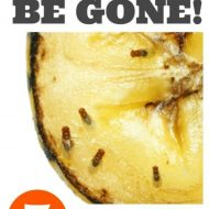 How to Kill Fruit Flies and Gnats