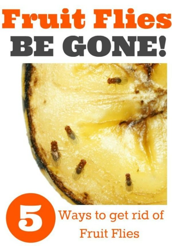 How to Kill Fruit Flies and Gnats | 5 ways to get rid of fruit flies and gnats | TodaysCreativeLife.com