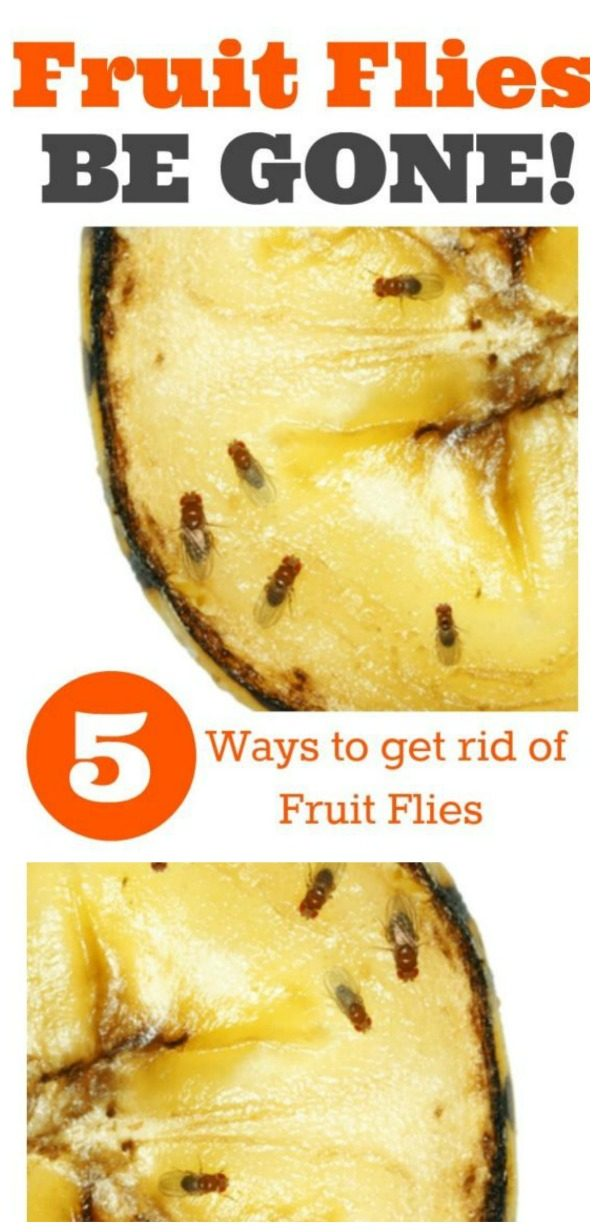 How to Kill Fruit Flies and Gnats | Non-Toxic Fruit Fly Traps | How to Get Rid of Fruit Flies | TodaysCreativeLife.com