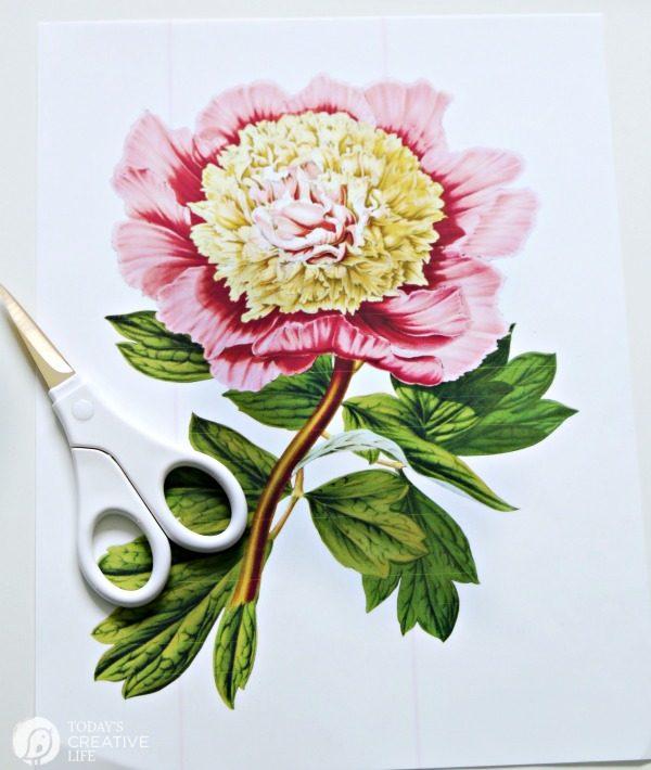 Printable Botanical Iron-on | TodaysCreativeLife.com