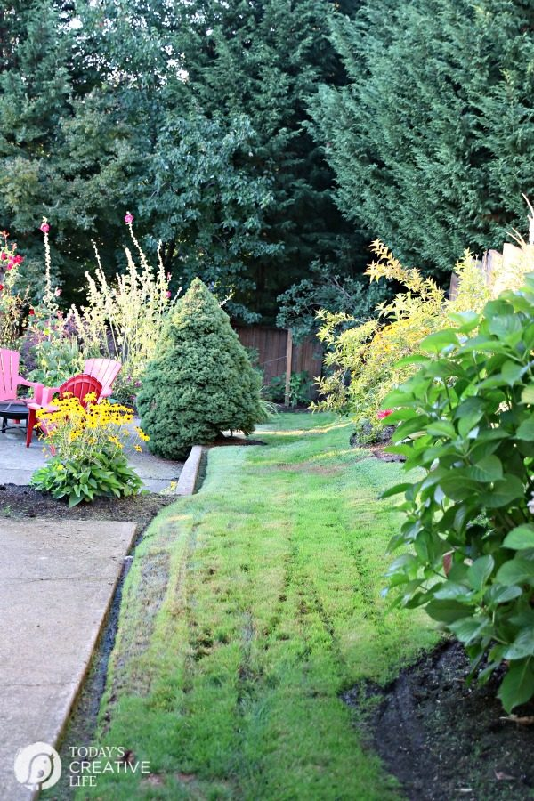 Fall Lawn Care with Grass Seed USA   TodaysCreativeLife.com