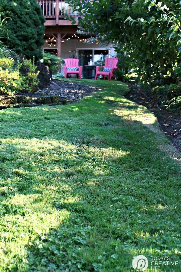 Grass Seed USA   Fall Lawn Care   TodaysCreativeLife.com