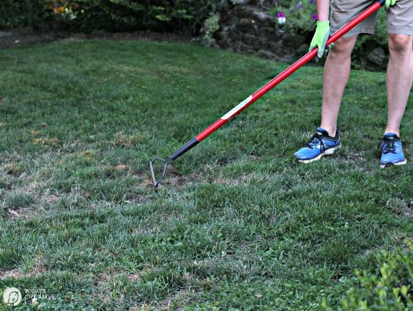 Reseeding your Grass. Step 1. Rake | TodaysCreativeLife.com