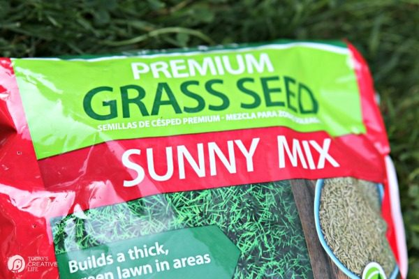 Grass Seed of America | How to reseed your lawn | TodaysCreativeLife.com