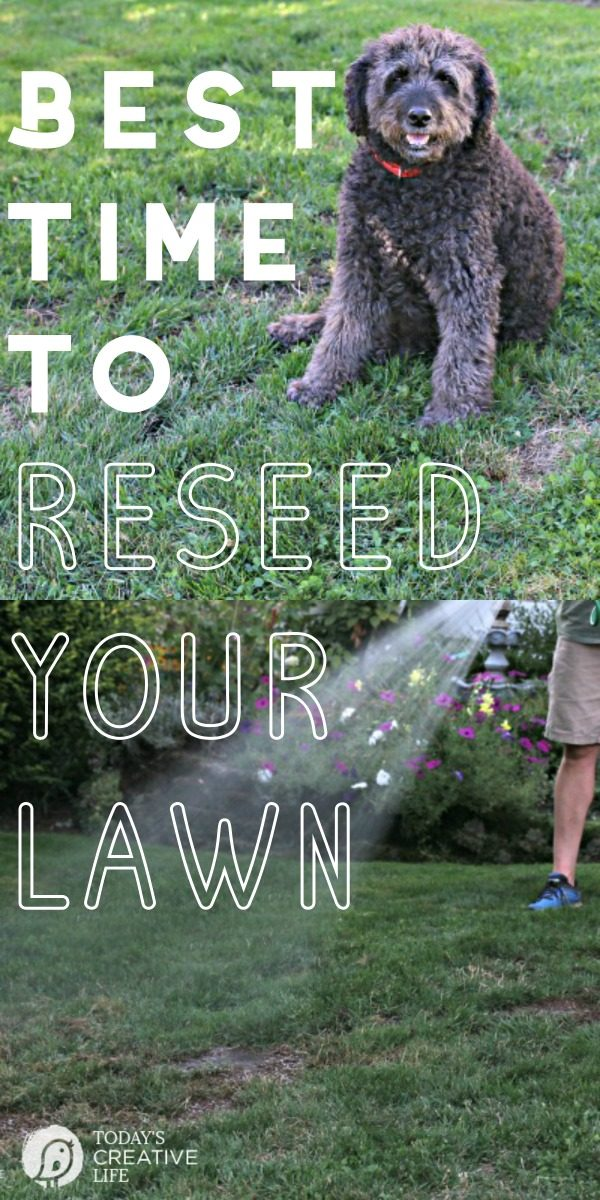 Best Time to Reseed your Lawn | Lawn Care Tips for reseeding your grass | Fall & Autumn Lawn Care Tips | Grass Seed Tips | TodaysCreativeLife.com