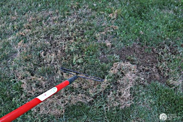 raking dead grass before reseeding lawn
