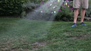 When to Reseed Lawn and Tips for Reseeding