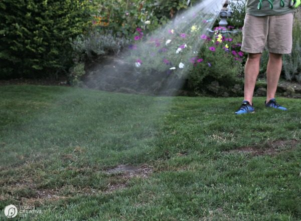 Watering newly seeded grass