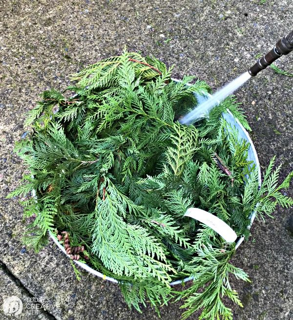 spraying water from a hose onto cedar garland to keep it fresh