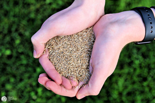 Grass Seed for Spring Yard Tips | TodaysCreativeLife.com