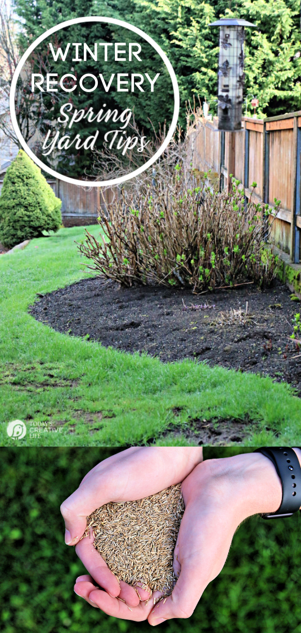 Spring Lawn Care Tips - Winter Recovery | How to prep your lawn for spring | Springtime yard prep | How to reseed your lawn | TodaysCreativeLife.com