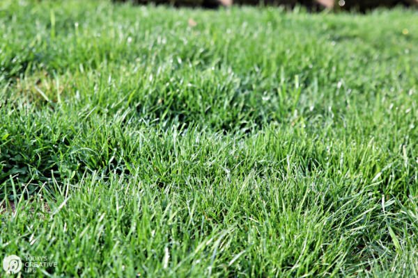 Grass Seed Farmers - Spring Lawn Care | TodaysCreativeLife.com