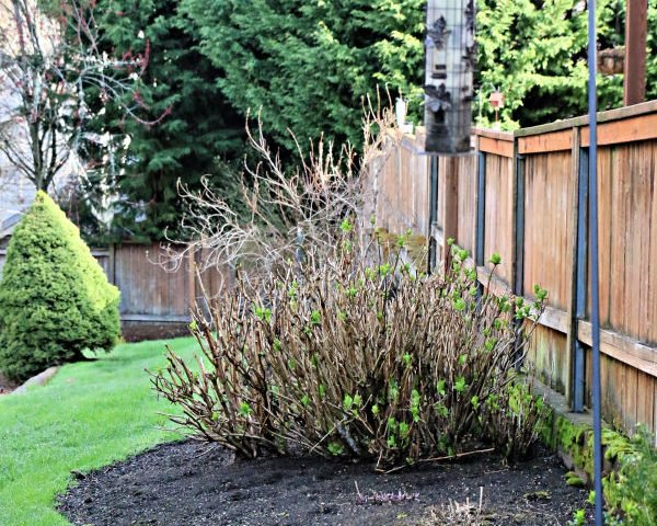 Spring Lawn Care Tips – Winter Recovery