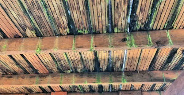 How to know when to replace a deck \ Mold and rot on wood