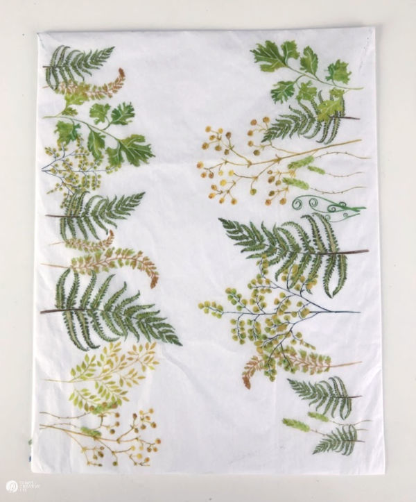 ferns printed on paper