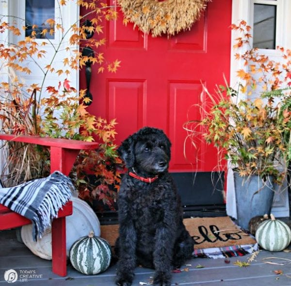 Porch with red door, fall decor and black labradoodle.