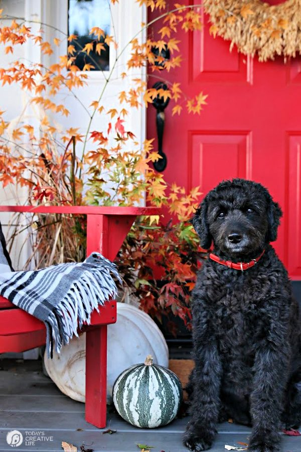 Fall porch with pumpkins, red door and black dog.