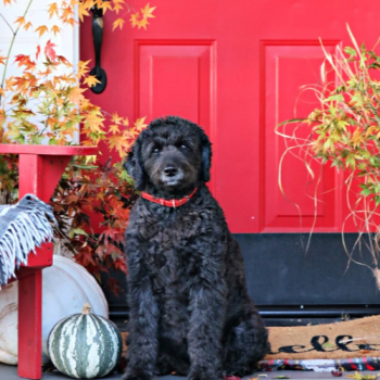 autumn porch with red door and black dog