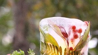 Diy Botanical Ice Luminaries