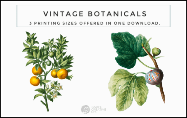 photo collage of botanical prints