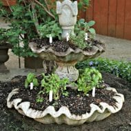 Old concrete fountain with plants and diy plant markers