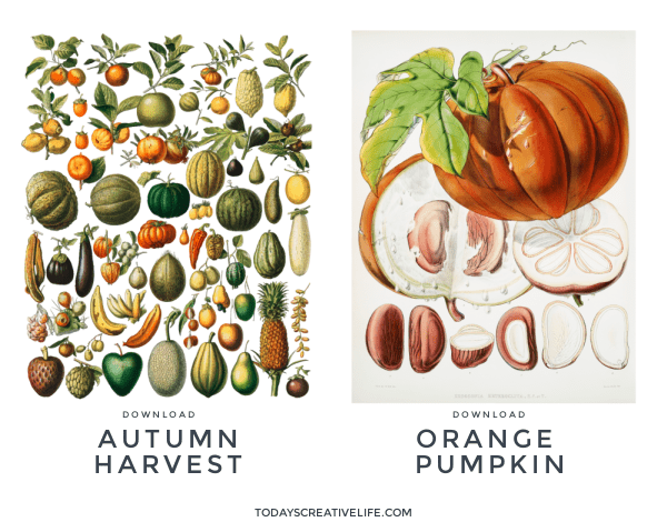 2 Fall Botanical Posters. Printable Botanical Wall Art for Fall