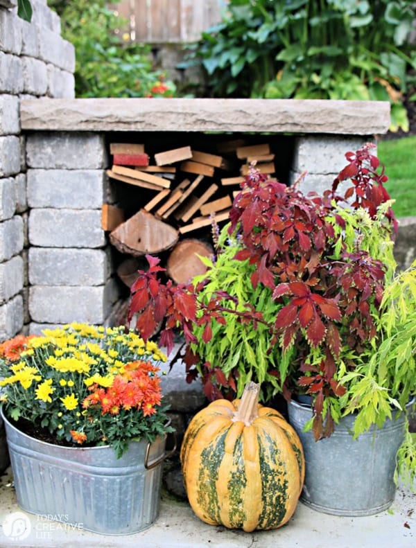 Fall plants with a striped orange and green pumpkin