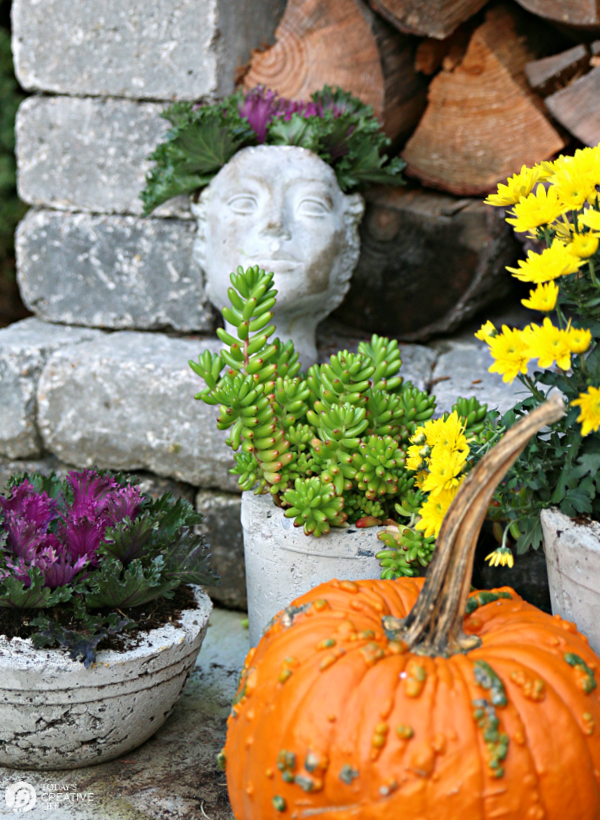 Pumpkins and Flowering Cabbage with Mums for fall decor outside.