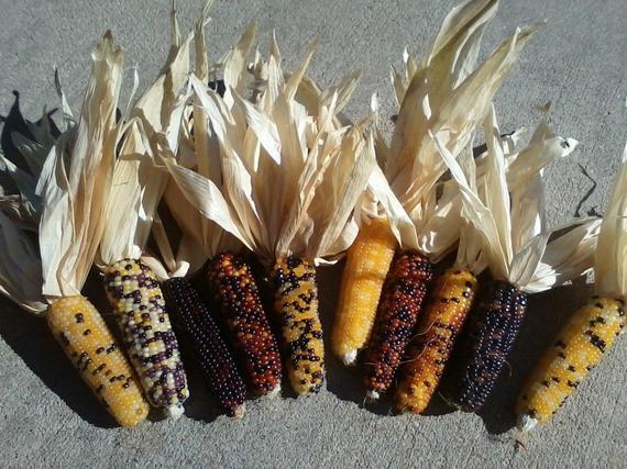 Mini Indian Corn